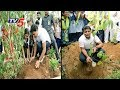 KTR launches Haritha Haaram in botanical gardens..