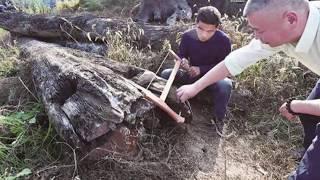 Nhặt được khúc gỗ trôi sông vứt ngoài vườn 5 năm không biết nó đáng giá 70 t/ỉ