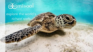 Misool: explore the world's richest reefs
