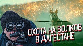 Волки бросились на охотников. Охота на волков в Дагестане. Выстрелы по волкам и шакалам.