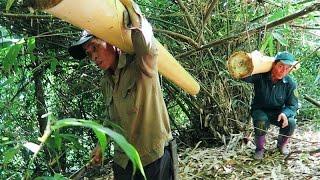 Harvesting Bamboo Shoots | MĂNG RỪNG TÂY BẮC - Tập 1