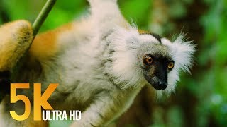 5K Madagascar Wildlife - Incredible Nature and Wildlife of Madagascar - 4 HOURS Video