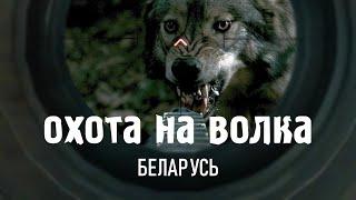 Охота на волка 2020