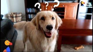 SMART Service Dog Makes HILARIOUS Mistake | The Dodo