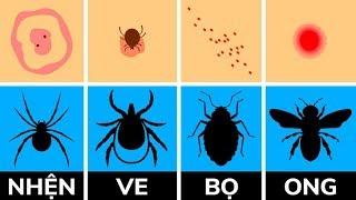 Cách xác định vết côn trùng cắn và phải làm gì với nó