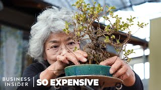 Why Bonsai Are So Expensive | So Expensive