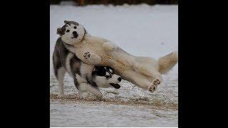 「絶対笑う」最高におもしろ犬,猫,動物のハプニング, 失敗画像集 #84