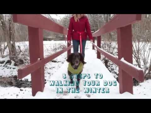 Dog Walking Tips for Winter!