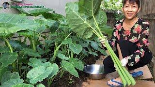 Hái ' trộm ' rau quả ở vườn khi chủ nhà đi du lịch xa 🇨🇦 Harvesting organic vegetables