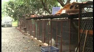 Hình ảnh trang trại động vật hoang dã Thanh Long từ HTV9