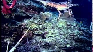 Kráľovstvo divočiny - Koralové útesy