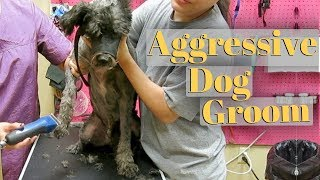 How to groom an aggressive dog