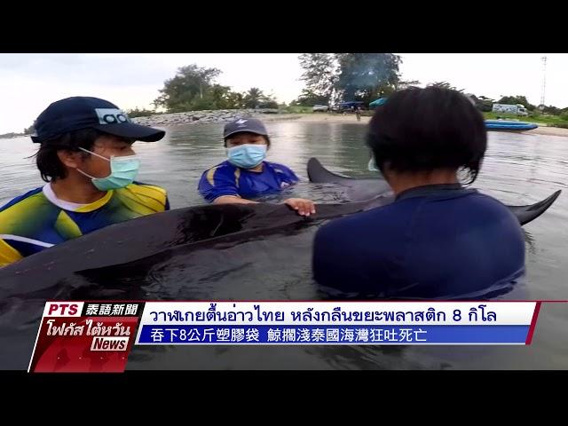 วาฬเกยตื้นอ่าวไทย หลังกลืนขยะพลาสติก 8 กิโล