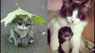 Cute baby animals Videos Compilation cute moment of the animals - Soo Cute! #17
