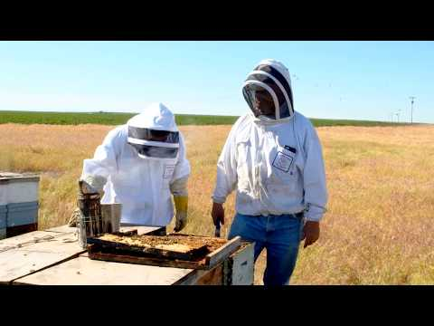 WaGrown Bees S3E10: Olson's Honey