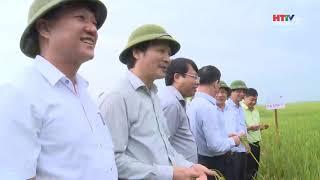 Bí thư Tỉnh ủy Hà Tĩnh kiểm tra một số MHSX lúa chất lượng cao của ThaiBinh Seed