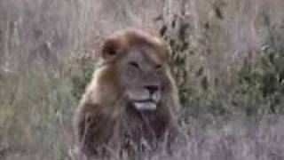 Excursión en safari