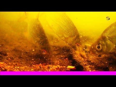 почему рыба клюет на пенопласт