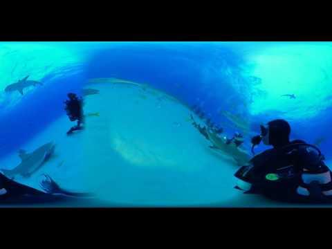 #360 Video at #TigerBeach #SharkWeek