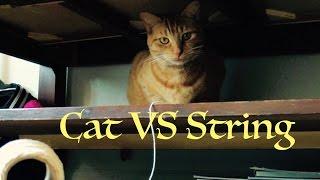 Derpy Cat Vlog #1: Cat VS String