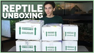 Unboxing 7 Pet Reptiles - New Snakes, Lizards and Turtles!