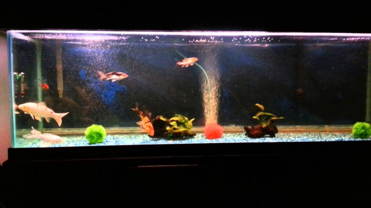 Koi fish tank - YouTub...