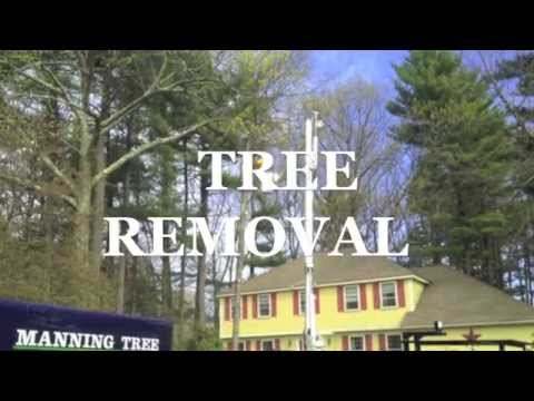 Tree Removal in Acton, MA Bucket Truck