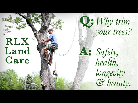RLX Land Care -- Minnesota's Tree Care Experts
