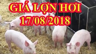 Giá lợn hơi hôm nay | Giá lợn hơi ngày 17/8/2018