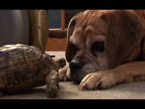 Turtle Bites Dog & Holds on for Life!!!