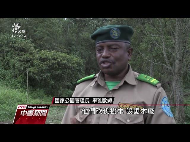 剛果民主共和國 護林員與原民因猩猩保育爆衝突