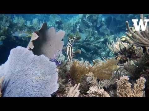 Big fish — and their pee — are key parts of coral reef ecosystems