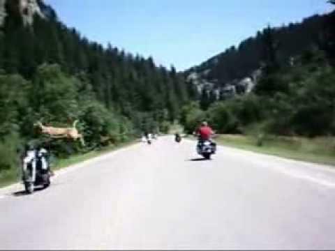 Jelen preskače motor u vožnji