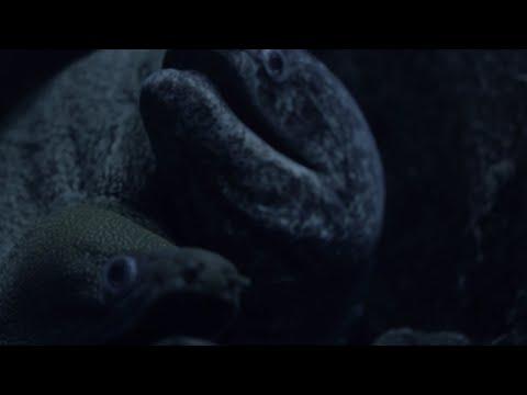 水、走る『海の底』MV