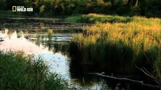 Dunaj - Európska amazonka