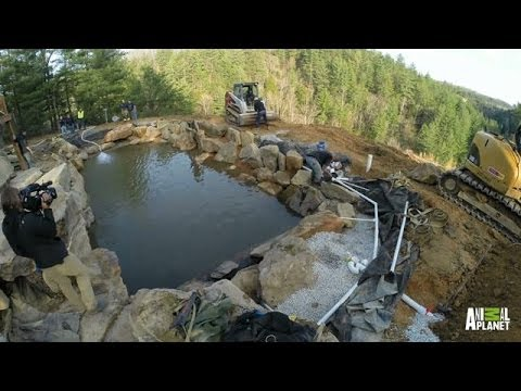 Time Lapse: Cliffside Pool | The Pool Master - Animal Planet  - IxVHOsoKVKY -
