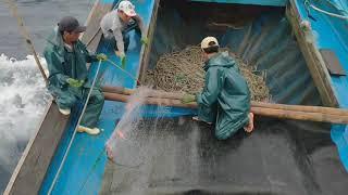 Đánh bắt cá trên biển của ngư dân quỳnh phương nghệ An  - dân biển quỳnh phương