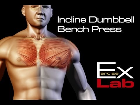 Incline Bench Press Dumbbells Chest Exercises Youtube