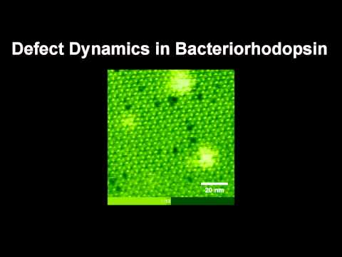 Defect Dynamics in Bacteriorhodpsin