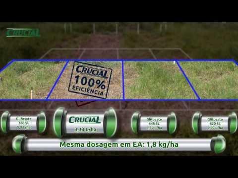 Ação do Herbicida Crucial em time lapse
