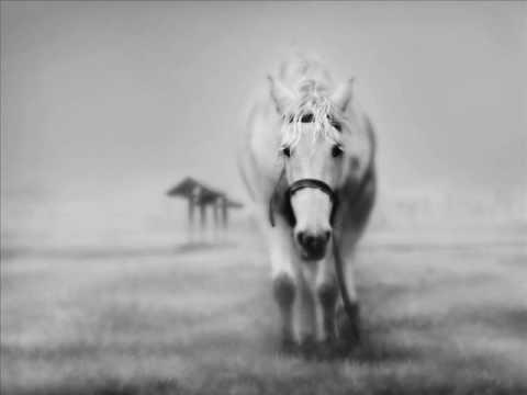 Аквариум - Лошадь Белая