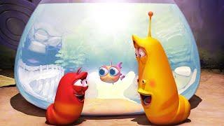 LARVA - золотая рыбка | Мультфильм фильм | Мультфильмы для детей | WildBrain
