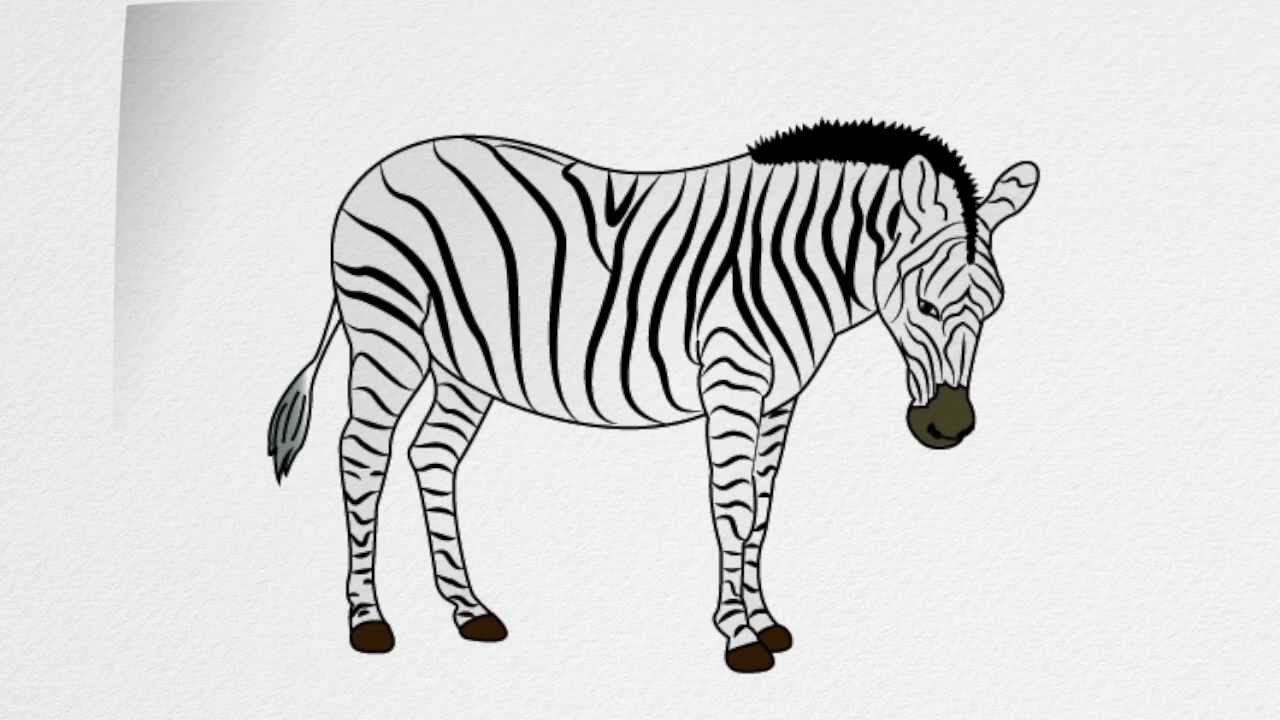 How to draw a ZEBRA step by step - YouTube