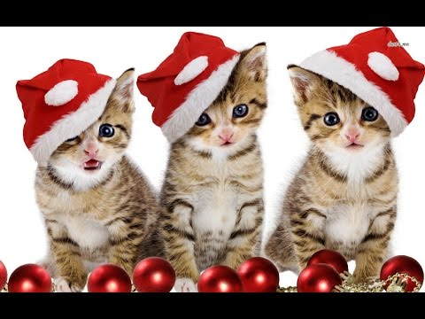 Cat Christmas Wishes
