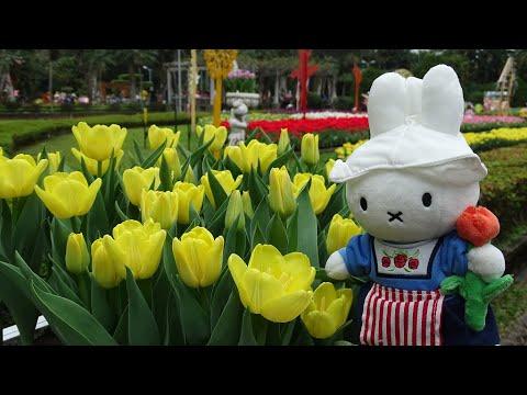 Tulips ~ 2020士林官邸鬱金香展 * 來自荷蘭和日本礪波10萬株花盛放