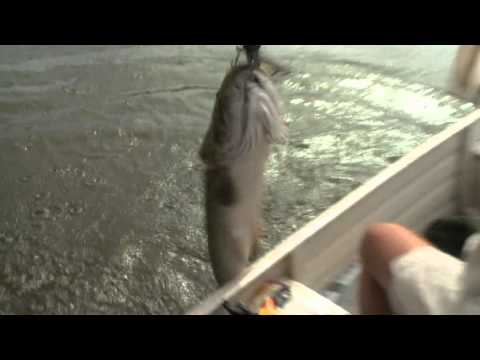 Meet the Trairao - Amazon Wolf Fish - Episode 3 - The Fish Finder on the Rio Travessao