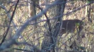 Missouri Buck Hunting (two deer one day) 10-28-2011