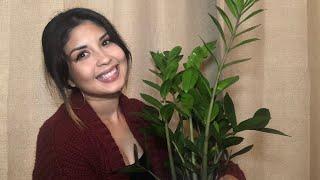 Easiest indoor plant! (ZZ plant)
