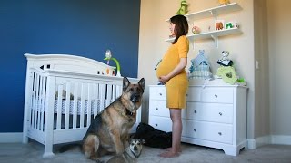 Time Lapse: Pregnant to Baby in 90 seconds. Photo a day.