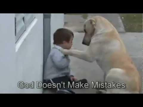 לברדור נקבה עם ילד לקוי קטן שכנראה מעולם לא ראה כלב כל כך קרוב בעבר.